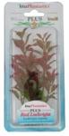 Растение аквариумное Red Ludwigia