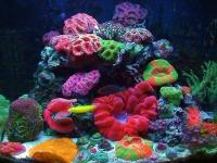 Изготовление, запуск морских аквариумов