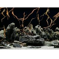Фон Barbus натуральная мистика высота 50-60 см