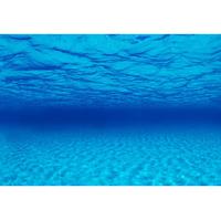 Фон Barbus морская лагуна высота 50-60 см