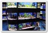 Красивые рыбки + бонус в подарок живые растения