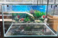 Аквариум для черепах 80 литров