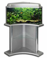 Коридорас /Corydoras aeneus