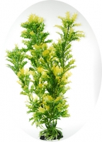 Гигрофила резная красно-зеленая 20 см