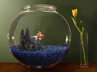 Круглый аквариум с петушком
