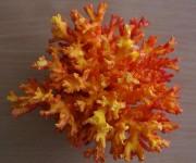 Крашенный коралл микс 7,5-10см